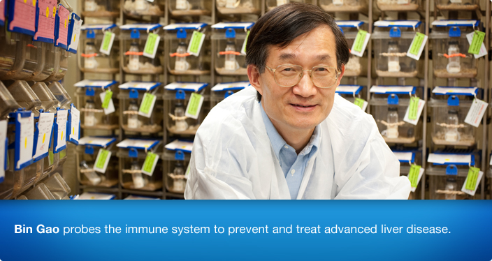 Dr. Bin Gao probes alcohol liver disease